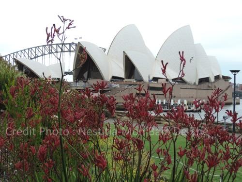 botanic garden opera house sydney